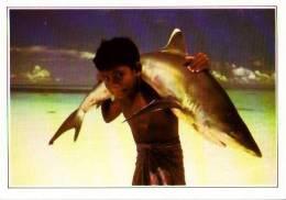 Maldives Islands       Requin à Pointe Blanche . - Maldives
