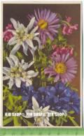 """""""Blumen, Photochromie-Offset, Serie 693 Nr.2010"""" Um 1950/1960 Ungebrauchte Karte - Botanik"""