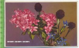 """""""Blumen, Photochromie-Offset, Serie 701 Nr.2043"""" Um 1950/1960 Ungebrauchte Karte - Botanik"""