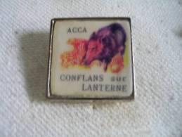 Pin´s ACCA (Association Communale De Chasse Agrée) De Conflans Sur Lanterne.  Sanglier - Animaux