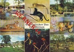Logabirum V. 1972  Ostfiesischer Zoo  (35759) - Leer