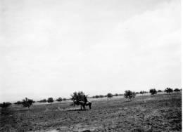 PHOTO AMATEUR 11/8 CM DE TUNISIE ANNEES 1900 .. ANIMEE.... QUI RECONNAITRA? - Afrique