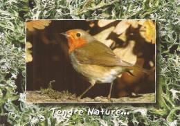 """Cp , Rouge Gorge , """"Tendre Nature..."""" , écrite , Ed : M.G. - Oiseaux"""