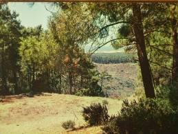 17 - RONCE-les-BAINS - La Mer à Travers Bois (Forêt De La Coubre) - Sonstige Gemeinden