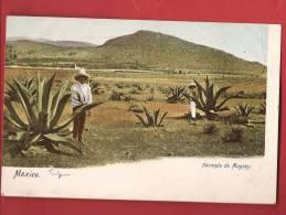 Q0297 Mexico Hacienda De Maguey, Agaves, ANIME. Pioneer. Non Circulé. - Mexique