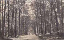 GOODWOOD - THE BIRDLESS GROVE - Surrey