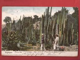 Q0385 Mexico Organos ANIME, Pioneer, Cachet 1906 Vers Olten Suiza - Mexiko