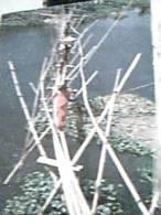 BANGLADESH BAMBOO BRIDGW PONTE DI CANNE DI BAMBU  N1990  DX4263 - Bangladesh