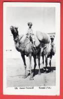 CPA: Pakistan - Karachi - Camel Transport - Pakistan