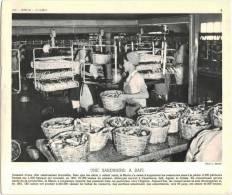 Document Photo (REPRODUCTION)  - Maroc - Une Sardinerie à Safi - Reproductions