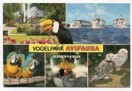 NETHERLANDS  - AK126766 Alpen Aan Den Rijn - Vogelpark Avifauna - Alphen A/d Rijn