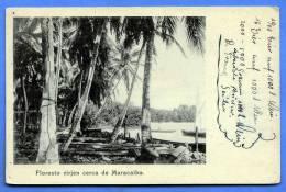 Venezuela Floresto Virjen Cerca De MARACAIBO, Nicht Gelaufen Um 1900 - Venezuela