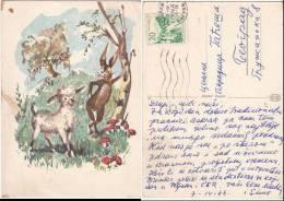Art Painted Unsigned Rabbit Lamb Mushrooms Old Greeting PC Us 1966 / 11262 - Peintures & Tableaux