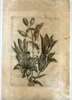 - FLEURS . BURIN DU XVIIe S. - B. Flower Plants & Flowers