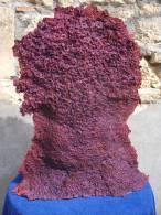 - CORALLIEN 4 . SCULPTURE EN CARTON BOULLI PEINT . PAR SYLVAIN GEORGES . - Sculptures