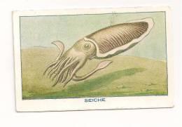 IMAGE BON POINT.  LA SEICHE  . SERIE DU SIROP DE DESCHIENS - Trade Cards