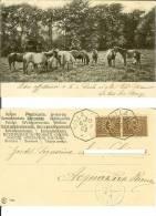 Cavalli: Cartolina Timbro Postale Ottagonale 30/09/1903 Villa Passo (Teramo) Dest. Acquaviva Picena (timbro) Horse Pferd - Cavalli