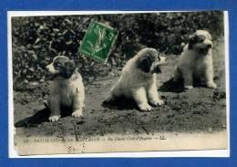 133  52  Petits Chiens Des Pyrénées Du Chenil Club D'argelès - Cani
