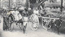 Ceylon COLOMBO, Rickshaw And Bullock Hackery, Nicht Gelaufen Um 1900, Gute Erhaltung - Sri Lanka (Ceylon)