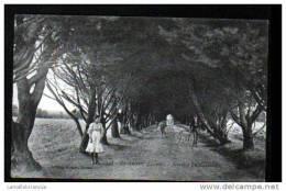 44 - PAIMBOEUF - AVENUE DU CIMETIERE - Paimboeuf