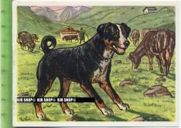 Der Appenzeller Sennenhund, C 43 Austria-Bildwerk, Kamerad Hund, Serie II: Schäfer Und Hirtenhunde. - Cigarette Cards