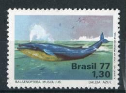 """BRESIL  1977   MNH   -   """" PROTECTION DE LA NATURE  - FAUNE  MARINE / BALEINE BLEUE """"  -   1  VAL - Whales"""