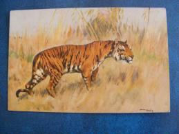 CPA...TIGRE PAR ARTHUR WERDLE....NON ECRITE - Tigres