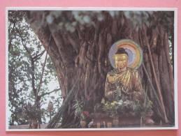 TIBET Under The Bodhi Tree - Tibet