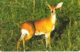 NIGERIA 300 U ANIMAL ANTELOPE ANIMALS NGA-TA-1 CHIP 30 CV:RRR  READ DESCRIPTION CAREFULLY !! - Nigeria
