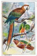 Chromo  -   Le Fer Larcade- Oiseaux - Perroquets à Ailes Vertes -à Tete De Maure  -erzlori - Unclassified