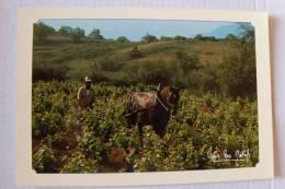 Pierre Dominique Natali 1983 - Image De Corse - Labour Des Vignes à Cheval - MEMORIA - Unclassified