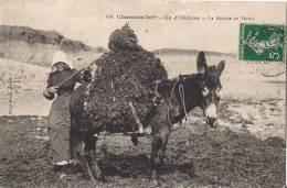 ILE D'OLERON  LA RECOLTE DU VARECH ANIMEE FEMME ET MULET DE 1911 - Ile D'Oléron