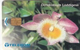 MALAYSIA(chip) - Flower, Dendrobium Lodiggesii, Telecom Malaysia Telecard RM20, Used - Malaysia