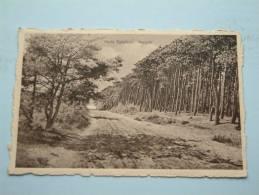 Boszicht Heide Kalmthout / Anno 1951 ( Zie Foto´s Voor Details ) !! - Kalmthout