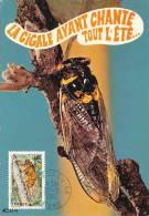 D07992 CARTE MAXIMUM CARD 1980 FRANCE - TIBICINA CP ORIGINAL - Insecten