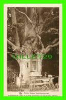 LUXEMBOURG - BILDCHESKOUESCHF - CHÊNE VIERGE - SÉRIE 9, No 142 - PETITE SUISSE LUXEMBOURGEOISE - E. A. SCHAACK - NELS - - Cartes Postales