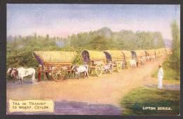 SR13) Ceylon - Tea In Transit To Wharf - Lipton Tea Advertising - Sri Lanka (Ceylon)