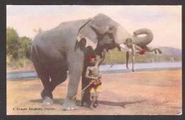 SR14) Ceylon - A Temple Elephant With A Boy On Its Tusks - Sri Lanka (Ceylon)