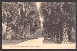 SR17) Ceylon - Talipot Palms, Peradeniya Gardens, Kandy - Sri Lanka (Ceylon)