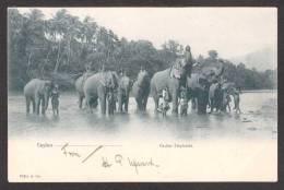 SR34) Ceylon - Eight Elephants - Undivided Back - Sri Lanka (Ceylon)