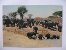 Cameroun Parc National De Waza  La Mare Aux Elephanrs    Alain Denis - Elefanti