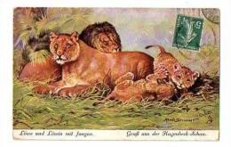 """****ANIMAUX CIRQUE ZOO LIONS ILLUSTRATEUR TUCK OILETTE : """"Löwe Und Löwin Mit Jungen - Gruss Aus Der Hagenbeck Schau"""" - Tuck, Raphael"""