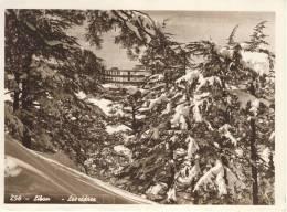 LIBAN - Les CEDRES ; Lebanon - The Cedars