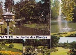 * * NANTES * * Le Jardin Des Plantes ( Carte Vierge ) - Nantes