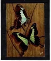 Animaux Papillon Schmetterling Farfalla Butterfly   YVON N° 18 - Papillons