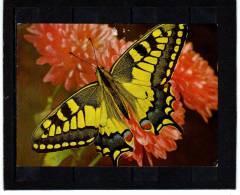 Animaux Papillon Schmetterling Farfalla Butterfly   VITA NOVA 348 - Papillons