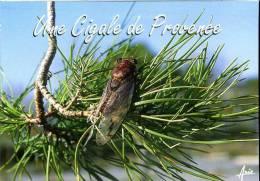 La Cigale Provençale - Insekten