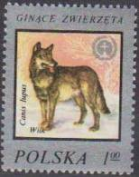 Pologne. Poland . 1977. Loup. Wolf...  ** Neuf; - Chiens