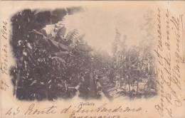 Madagascar Vanillerie Plantation 1904 - Madagascar