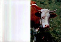 CALENDARIO TASCABILE - Anno 1967 - Calendriers